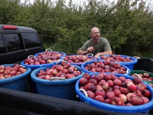 apple harvest 2013